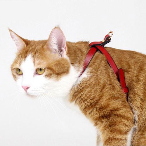 프리미엄 I형 고양이 가슴줄(하네스) 레드 (XXXS,XXS,XS,S,M,L,XL)